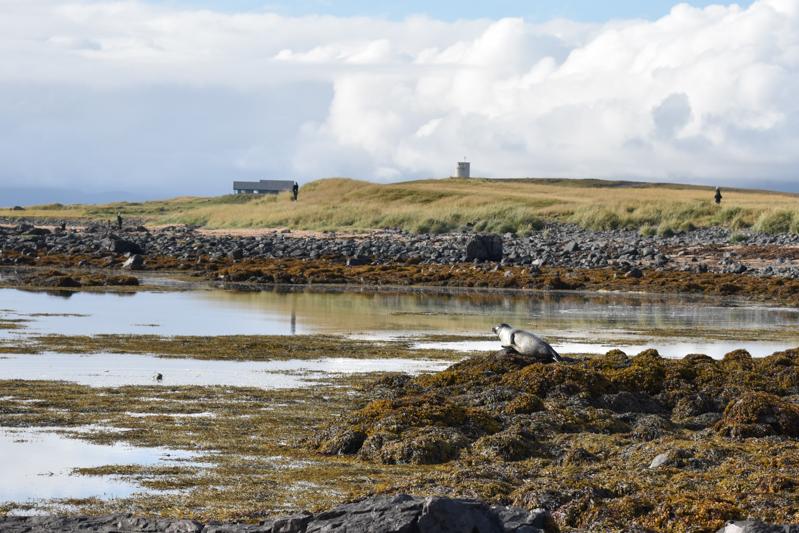 Seehunde am Ytri Tunga Strand