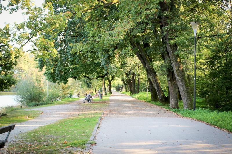 Foto: Leopoldskron Weg mit Bäumen