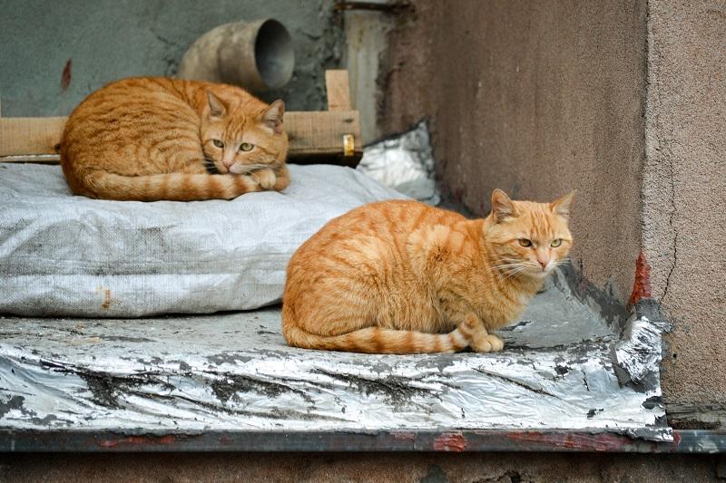 Katzen gehören zum Straßenbild Istanbuls genauso wie die vielen Moscheen.