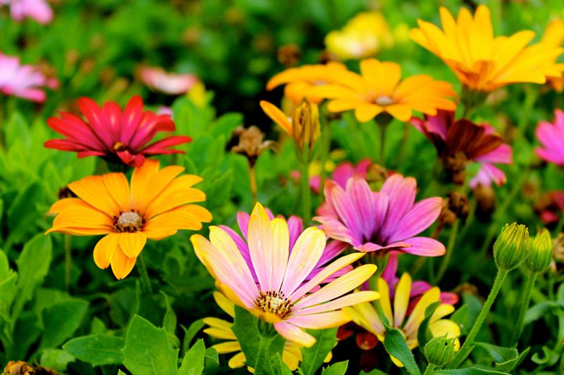 Ostern und seine Bräuche – ein Blick hinter die Kulissen: eine Blumenwiese mit gelben, orangen, roten und hell-violetten Blumen.
