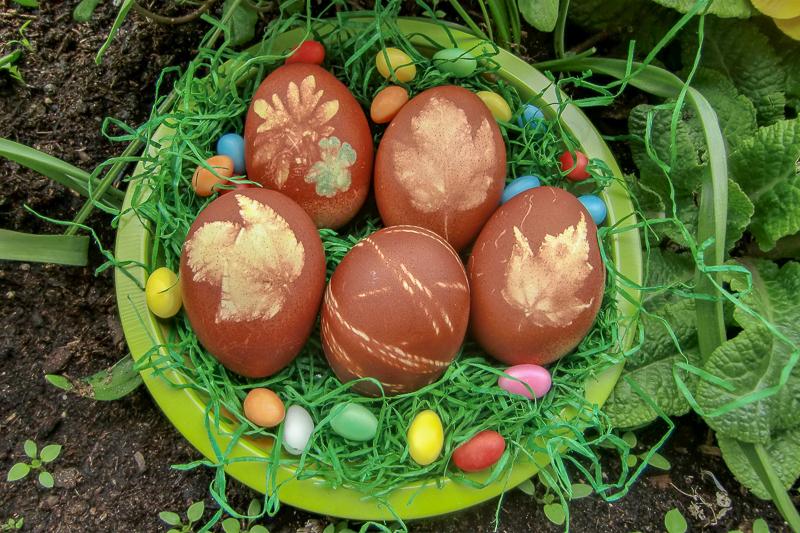 Ostern und seine Bräuche – ein Blick hinter die Kulissen: mit Zwiebelschalen-Sud gefärbte Ostereier in einer grünen Schale mit Ostergras.